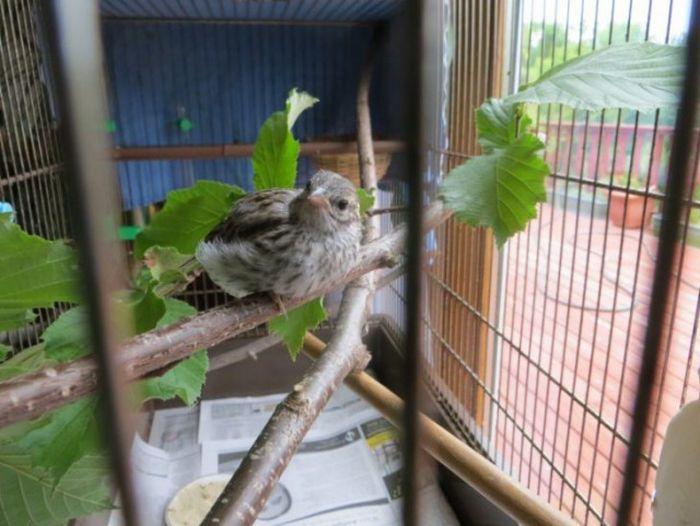 Veterinarian Saves Tiny Little Bird (14 pics)