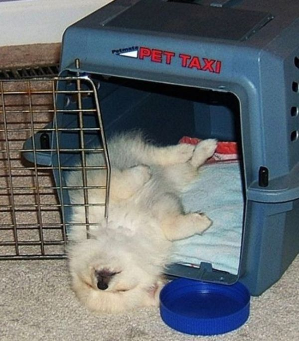 Photos That Prove Pets Can Sleep Anywhere (21 pics)