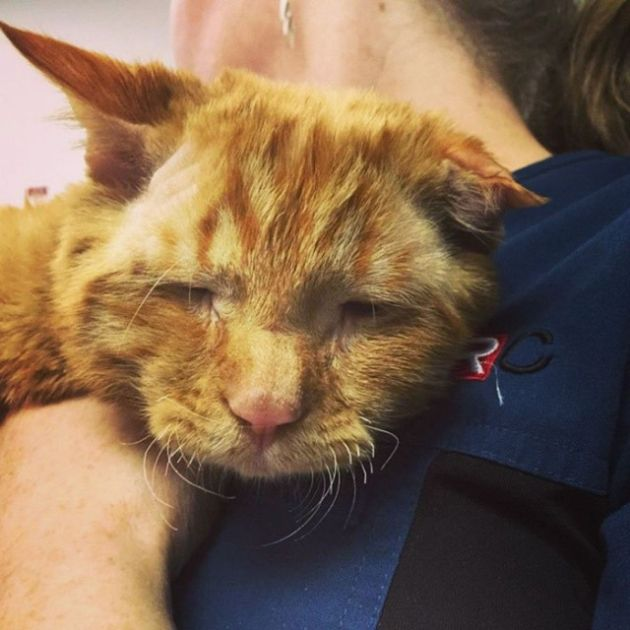 Sad Shelter Cat Changes Its Face After Being Adopted (12 pics)