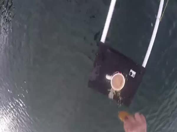 Bungee Dunk Into Cup Of Tea
