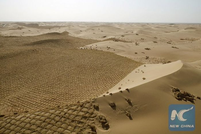 China Is Trying To Turn Parts Of The Desert Green (4 pics)