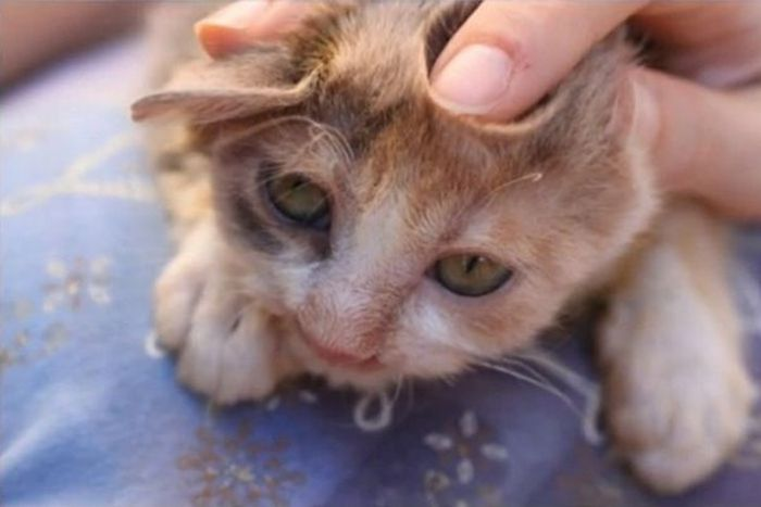People Were Scared Of This Cat, But A 7 Year Old Girl Saved Her (7 pics)