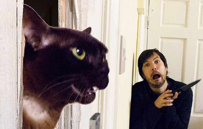 Guy Uses His Cats To Hilariously Recreate Scenes From Iconic Movies (5 pics)
