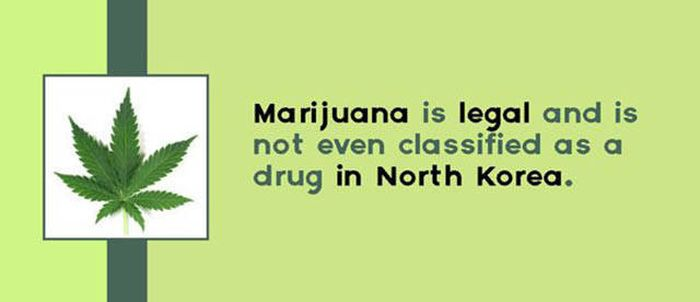 Random Facts About Drugs That You Definitely Need To Know (16 pics)
