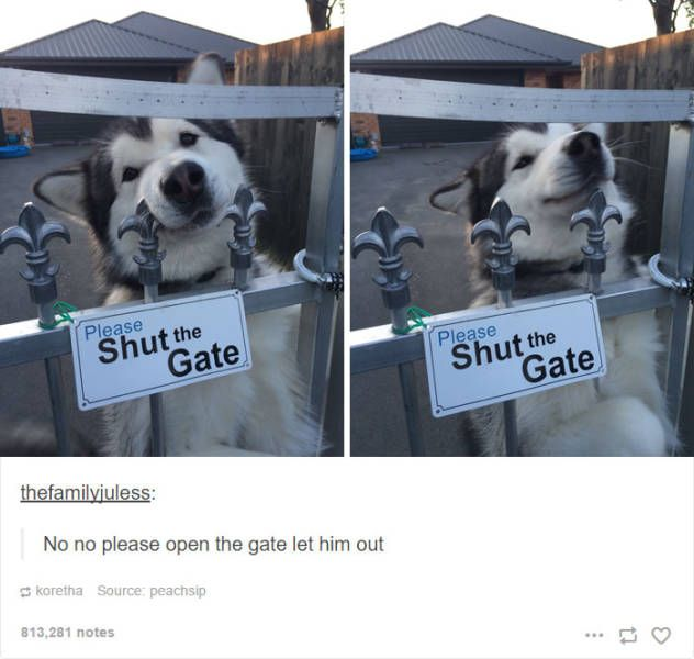 Some Of The Funniest Posts About Huskies For You To Enjoy (36 pics)