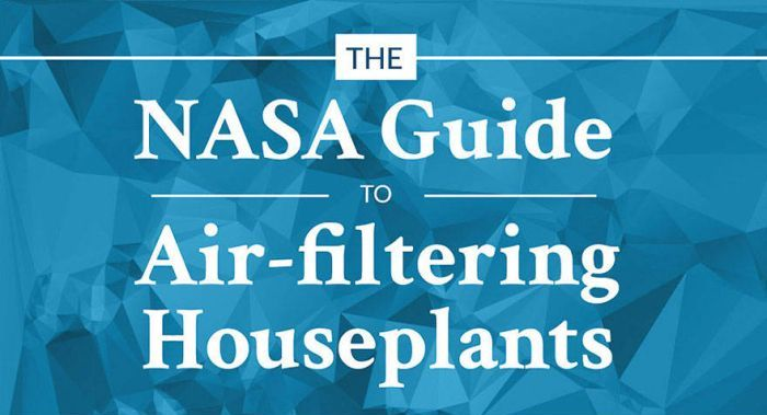 The NASA Guide To Air Filtering Plants For Your Home (2 pics)