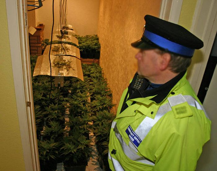 Police Find A Huge Marijuana Stash After Neighbors Report An Unusual Smell (9 pics)