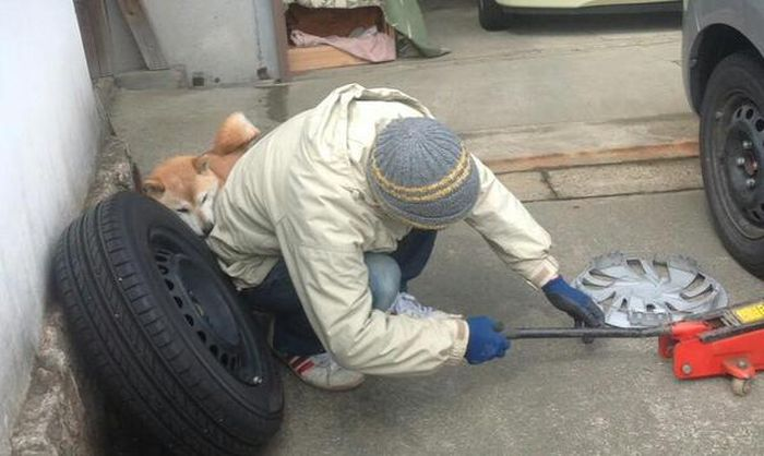 Dog Offers A Little Assistance (4 pics)