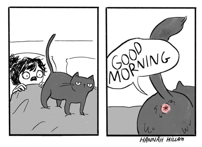 Artist Uses Hilarious Illustrations To Show What It's Like To Live With Cats (20 pics)