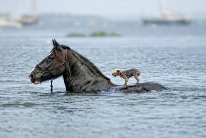 Pictures That Refuse To Say Less Than A Thousand Words (40 pics)