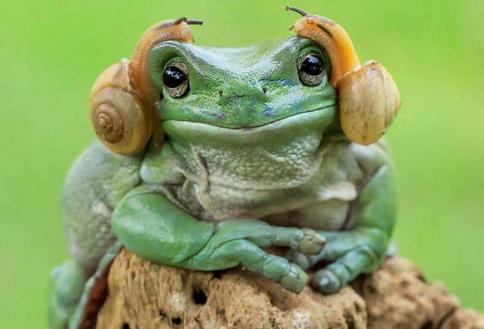 Frog That Looks Like Princess Leia Gets The Photoshop Battle Treatment (38 pics)