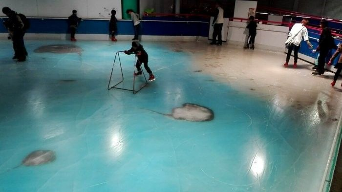 Thousands Of Fish Frozen In Japanese Ice Rink (2 pics + video)