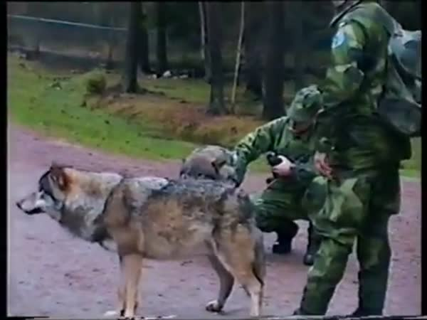 Wolf Attacks Zoo Worker
