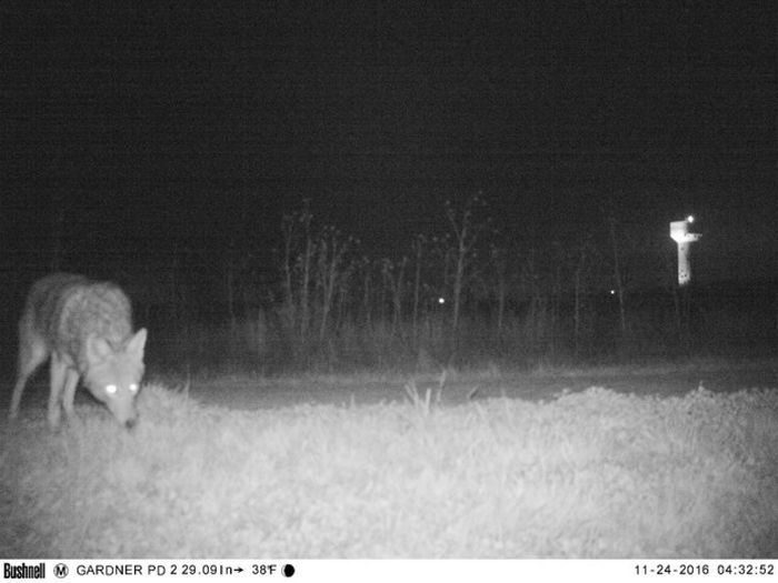 Police Capture Frightening Images After Setting Up A Camera In Kansas (8 pics)
