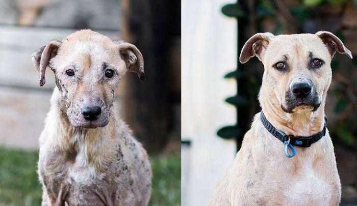 Dog Looks Drastically Different After Being Rescued (3 pics)