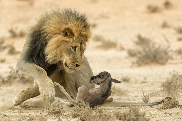 The People's Choice Awards Wildlife Photographer Of The Year Finalists (24 pics)