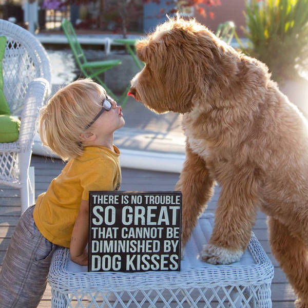 This Boy And His Adorable Labradoodle Do Everything Together (13 pics)