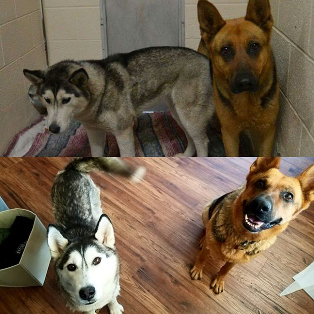 Before And After Animal Photos Show The Difference A Loving Family Makes (22 pics)