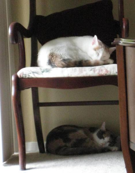 These Two Cute Cats Are Perfectly Synchronized (13 pics)