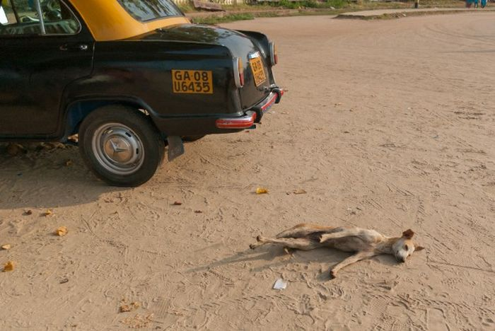 A Different Side Of Everyday Life In India (40 pics)