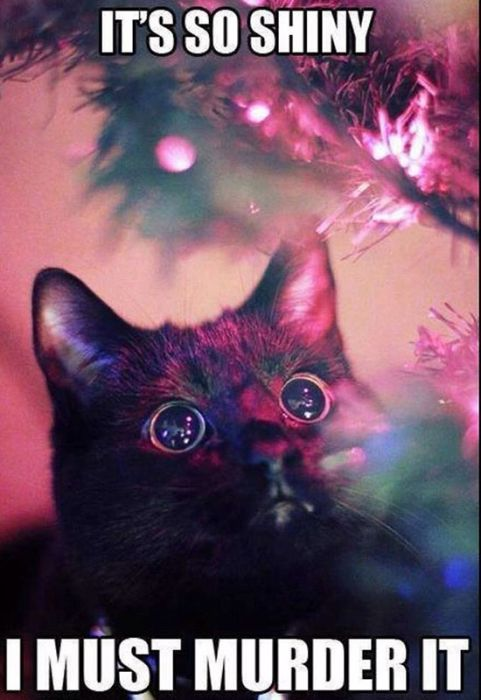 Cats Seem To Love Christmas Tress (22 pics)