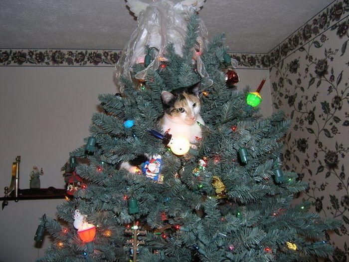 Cats Seem To Love Christmas Tress (22 pics)