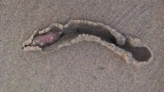 Unusual Creatures Wash Up On The Beach In California (8 pics)