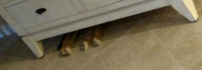Dog Doesn't Fit In Its Favorite Hiding Spot Anymore (3 pics)