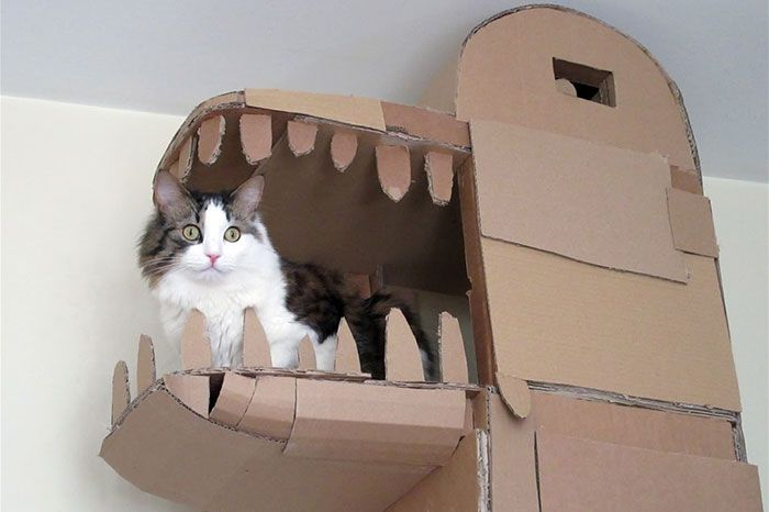 Guy Builds Awesome Dragon-Shaped Cardboard House For His Cat (5 pics)