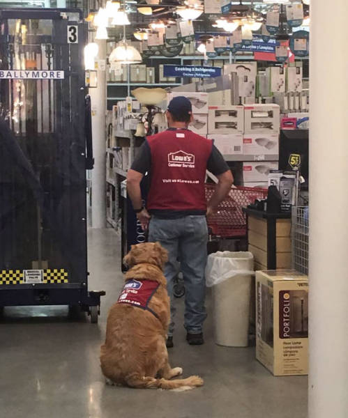 Disabled Veteran And His Service Dog Get A Job (7 pics)