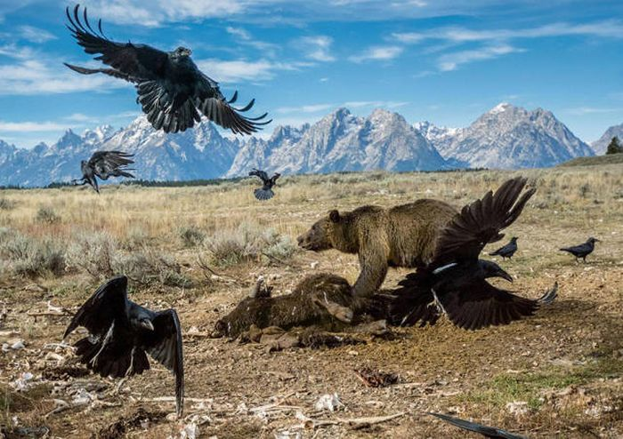 The Best National Geographic Photos Of 2016 (43 pics)
