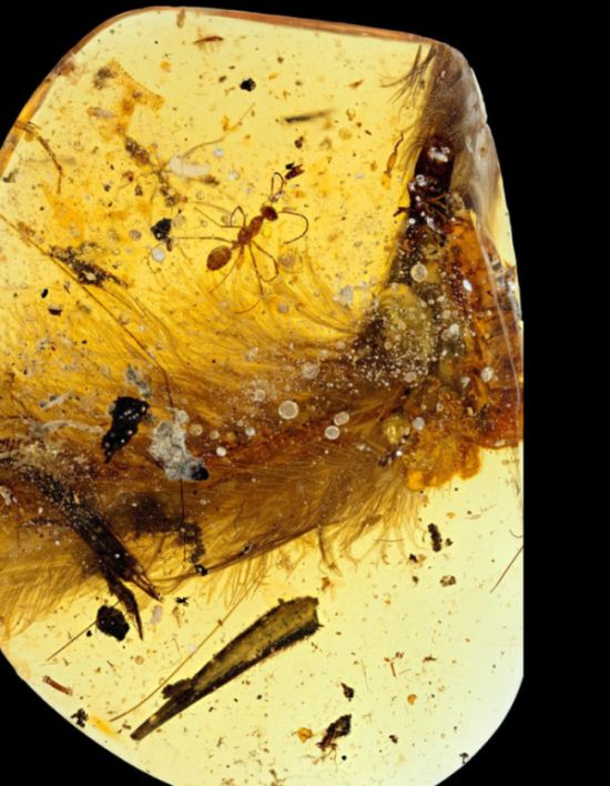 Preserved Feathered Dinosaur Tail Discovered By Paleontologists (6 pics)