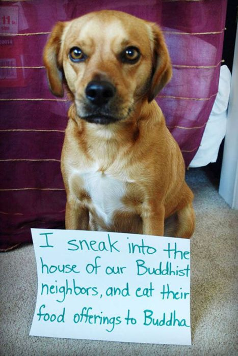The Ultimate Collection Of Hilarious Pet Shaming Photos (26 pics)