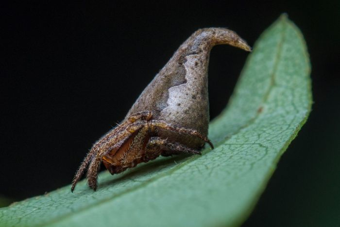New Spider Gets Named After Harry Potter Character (3 pics)