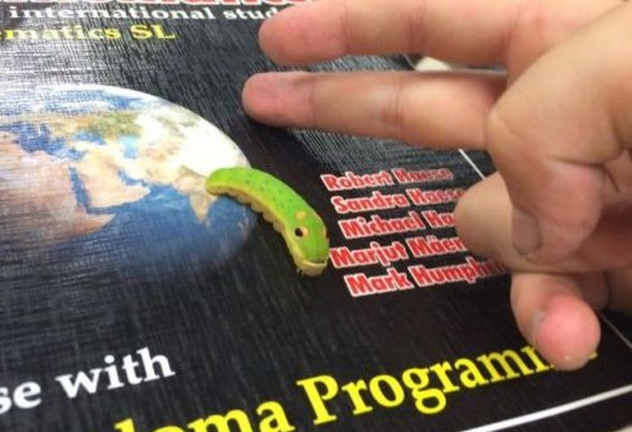 Guy Shares Funny Story About His Friendship With A Caterpillar (4 pics)