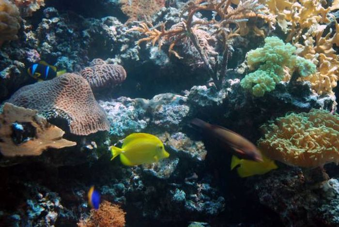 Man Builds An Aquarium Where He Can Scuba Dive With Fish (12 pics)