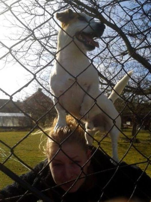 Funny Dogs That Are Impossible Not To Laugh At (24 pics)