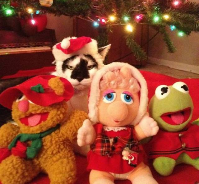 Pets That Definitely Aren't Excited For The Holidays (56 pics)