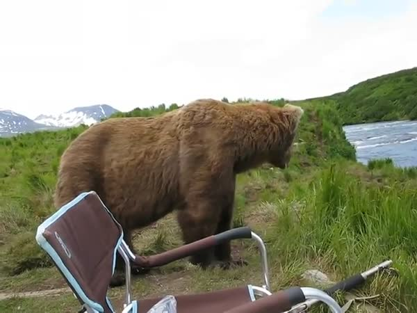 When A Bear Wants To Sit And Chill You Sit And Chill With Him