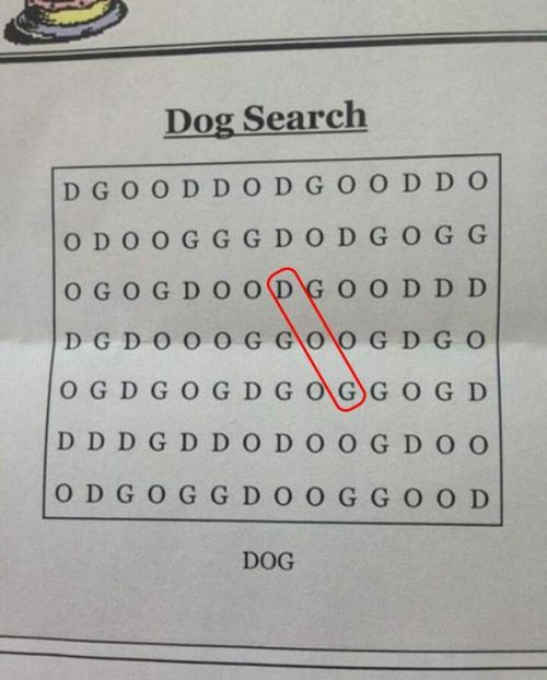 Clever Dog Puzzle Has People Scratching Their Heads (2 pics)