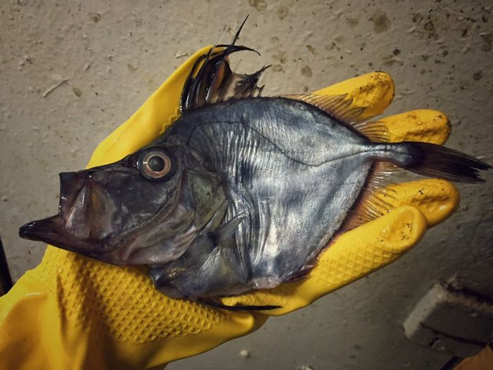 Russian Sailor Shows Off Some Of The Strange Fish He's Caught (21 pics)