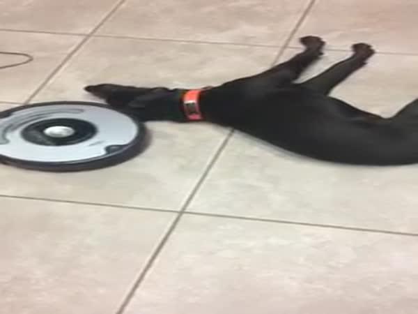 Lazy Dog And Roomba