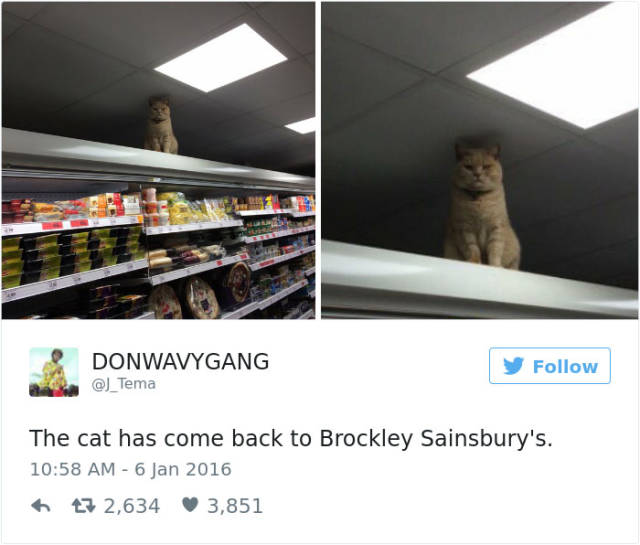 Tweets About Cats That Absolutely Hilarious (39 pics)