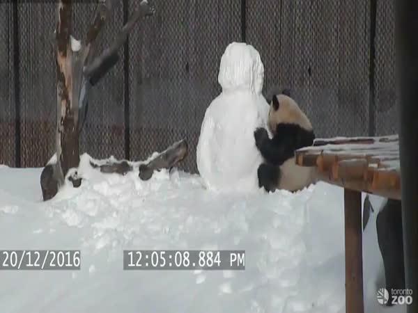 Panda VS Snowman