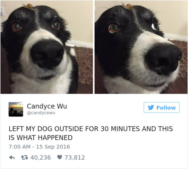 The Most Hilarious Dog Tweets Of 2016 (50 pics)