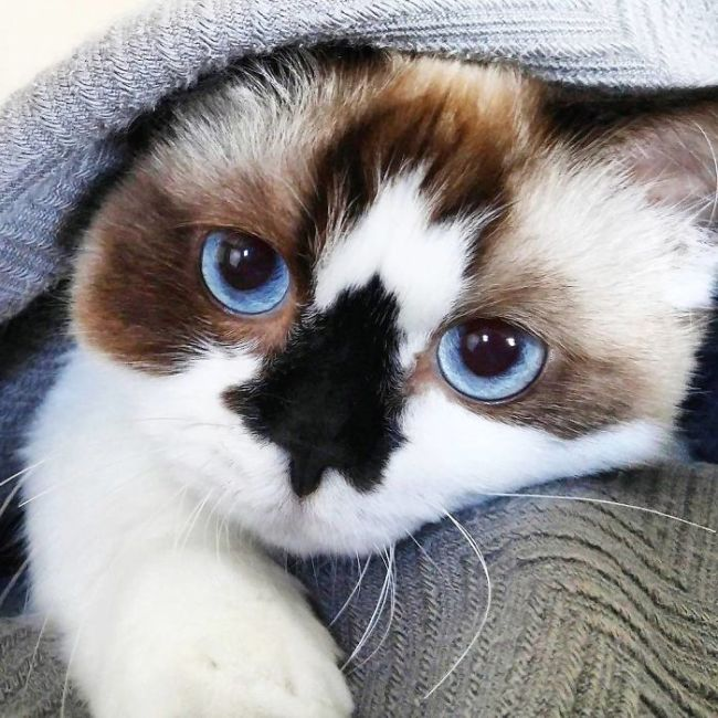 This Adorable Cat Has 450,000 Followers On Instagram (12 pics)