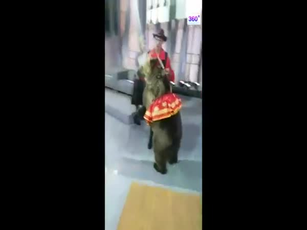 Bear Attacked A Reporter Live on Russian TV