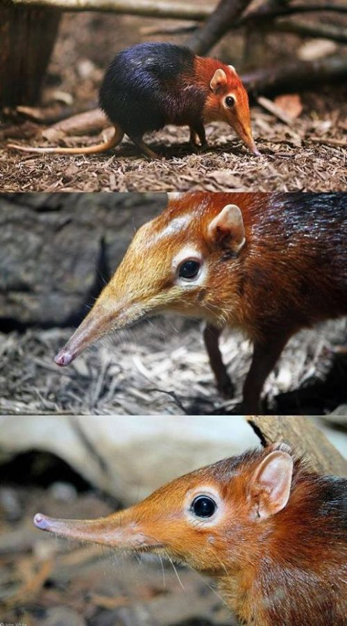 Cool Pics Of Weird And Adorable Animals (17 pics)