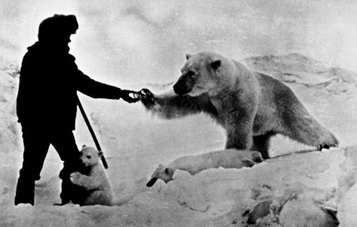 Polar Explorers Get Up Close And Personal With Polar Bears (4 pics)