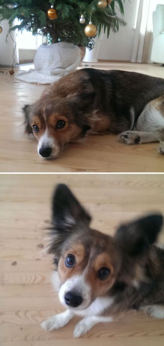Animal Reactions Before And After Being Called A Good Boy (27 pics)
